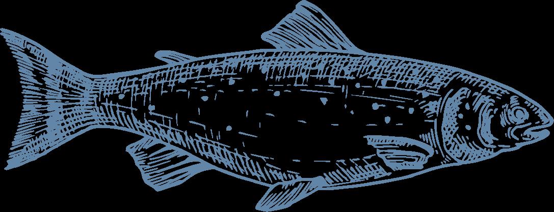 """En Japón el Salmón Coho se ha convertido en un alimento muy apetecido que ha alcanzado gran reconocimiento, y que se consume de varias formas, especialmente salado y cocido en lo que se llama """"kirimi"""". Al igual que los otros salmónidos, tiene un alto porcentaje de DHA lo que lo hace muy valorado por sus positivos niveles de Omega‐3. - Producto de Aqua Chile"""